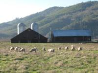 Commercial Agriculture Property in Douglas County Oregon
