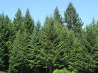 Recreation and Forest Property in Douglas County Oregon